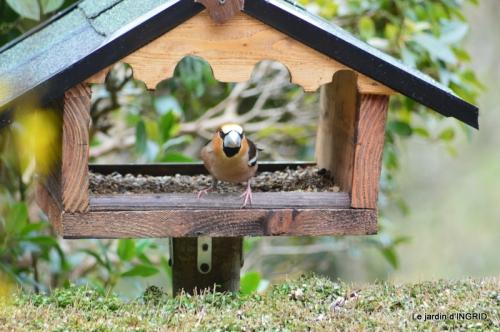 vue sur la terrasse,crocus,oiseaux, 013.JPG