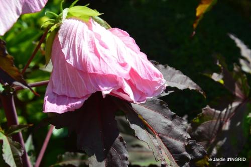 Ines,bouquet,hibiscus rose,cygnes,jardin 131.JPG