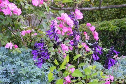 Trémolat,petit jardin,Julie 065.JPG