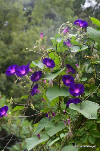 jardin,les filles,fleurs Peyrichou 001.JPG