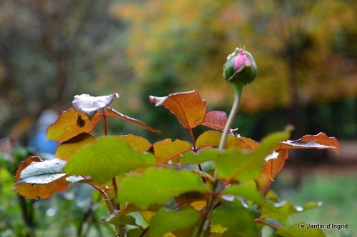 jardin serre bucher automne 012.JPG