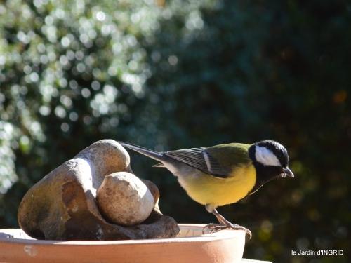 Mompazier,oiseaux,givre 116.JPG