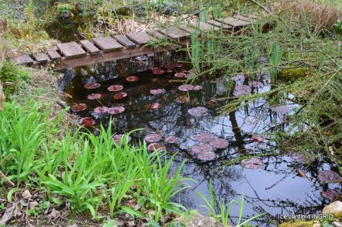 jardin (3 semaine de mars) 103.JPG