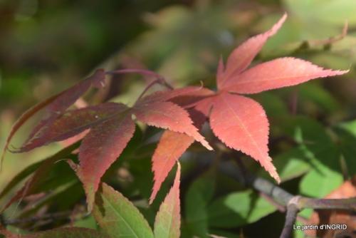 sauges,bouleau,coucher de soleil,érables,automne 017.JPG
