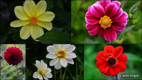 2014-09-10 jardin,puces Lasmonzie,asters1.jpg