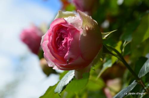 jardin,roses,cabane 107.JPG
