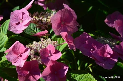 jachère,couleur,bouquet 015.JPG