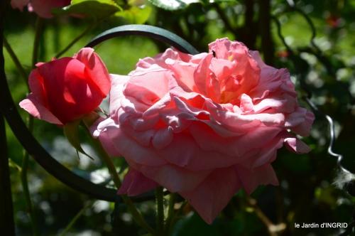 cygnes,Sophie,jardin en mai 066.JPG