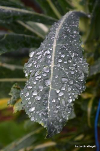 bourdon,sauges,pluie 063.JPG