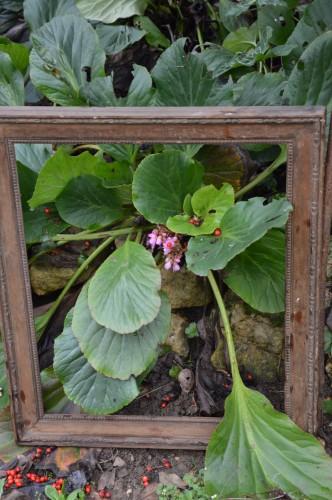 chez Maryse,pour tableaux,jardin 2013 053.JPG
