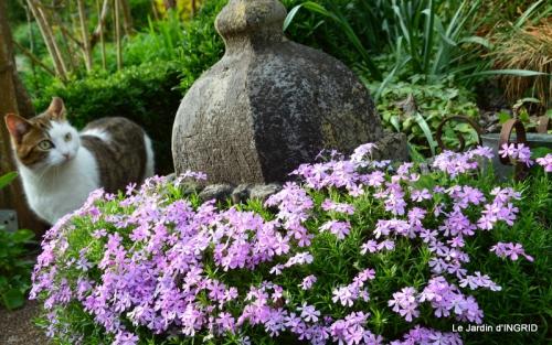 jardin avril,tulipes pivoine,iris d'eau,chenilles 093.JPG
