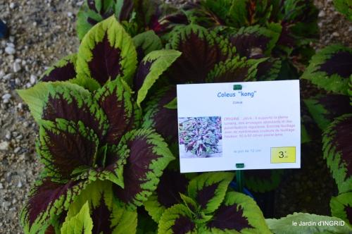 coquelicots,fête des fleurs Lalinde,fouleix,jardinage 039.JPG