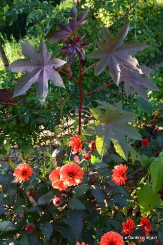 jardin début d'automne ,Sophie,rouge 026.JPG