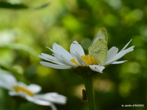 insectes,Romane ,lalinde,jardin 064.JPG