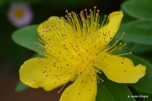 coeur des fleurs,papillons,libellules 131.JPG