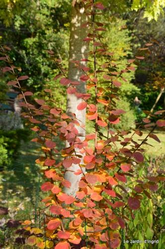 jardin automne,Arya avec Nicky 105.JPG
