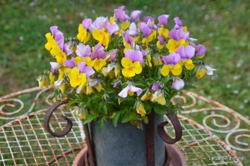 jardin avril et mai, 022.JPG