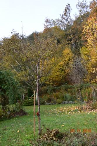 arbres,vues,kaki,kiwi,fleurettes,en fâce 002.JPG