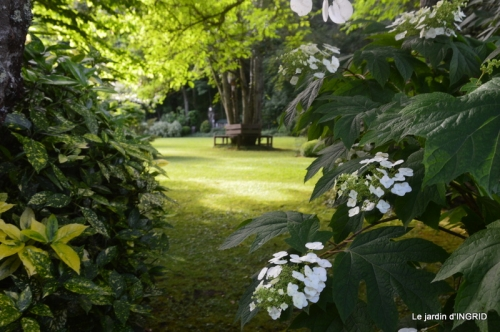 inondation,jardin,oeufs cygnes,chez Nathalie 044.JPG