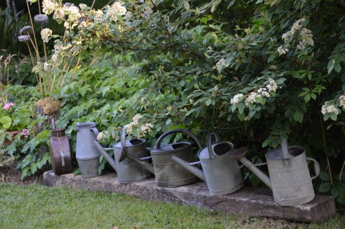potager ,roses,jardin 015.JPG