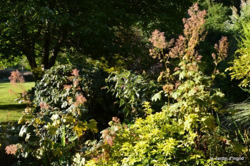jardin,asters,fleurs blanches,chatte,rosiers roses 057.JPG