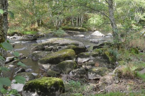 la Sedelle,étang de Riault,cyclamens 061.jpg
