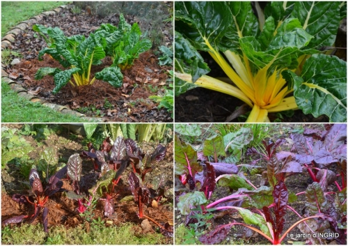 2018-11-28 Brouillard,cypres chauve,jardinage2.jpg
