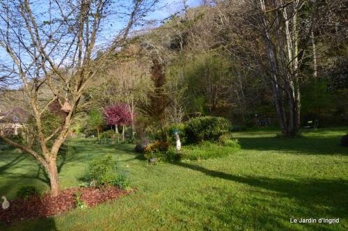 paquerettes,arums,laurier palme,jardin 074.JPG