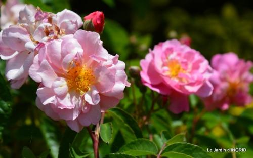 Cadouin,ancolies,roses,pollen,osier,photos Fabien,coquelicots 129.JPG