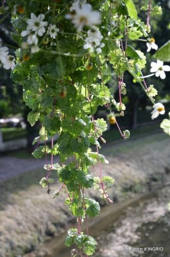 jardin,les filles,gerbera,Lalinde 134.JPG