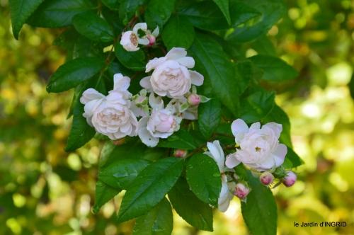 tour de jardin,bouquet,chez Bernadette, 068.JPG