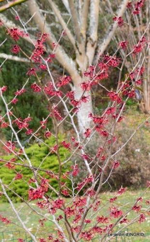 rose blanche,jardinière ,jardin,pt cyclamen 019.JPG