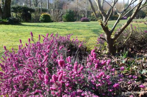 pluie,violettes,hélébores,jonquilles,jardin 027.JPG