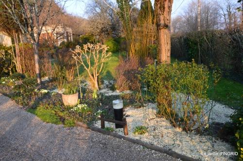 paillage,primevères,jonquilles,jardin 075.JPG