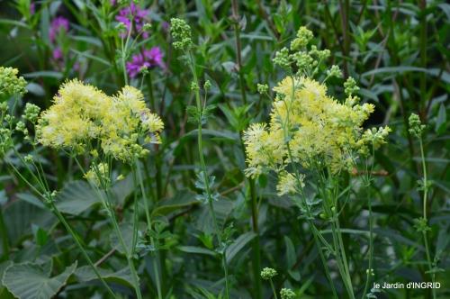 jardin,chez Bernadette,puces,cygnes,pluie 099.JPG
