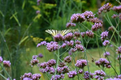 datura,papillon,Meyrals,déco Bergerac,bignonia 033.JPG