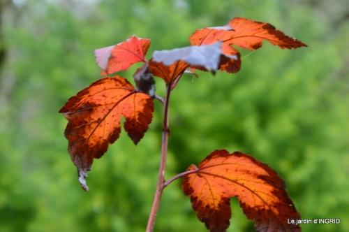 Brouillard,cypres chauve,jardinage 056.JPG