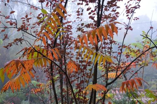brouillard le matin d'automne 076.JPG