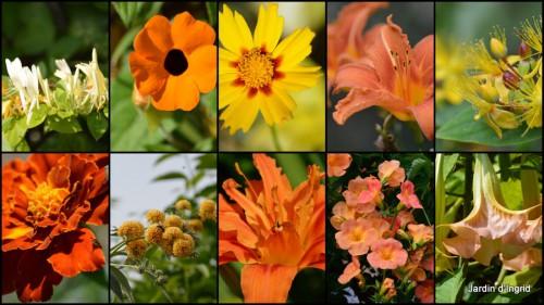 2013-07-30 datura,papillon,Meyrals,déco Bergerac,bignonia3.jpg