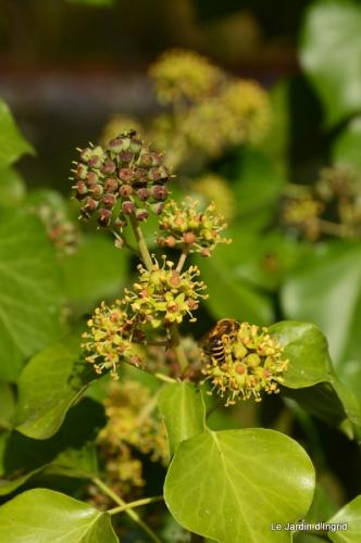 automne jardin,la rue,abeilles,les p filles 124.JPG