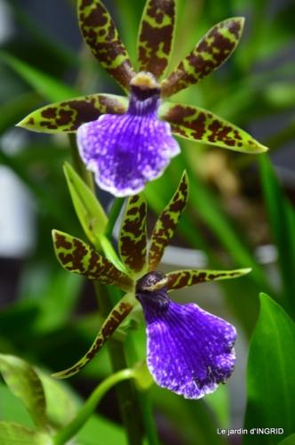 Orchidées,Noel jardiland,lever du soleil 021.JPG