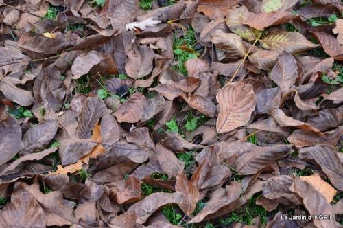 Romefort,bord de Creuse,vent,feuilles,jardin,canal 160.JPG