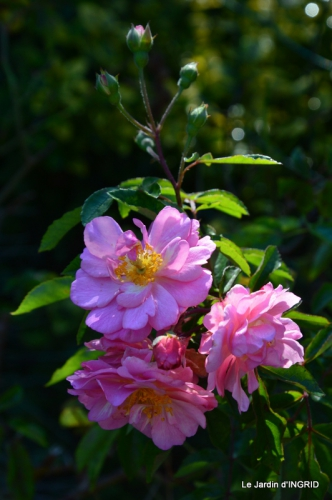 jardin, feuilles,sauges,gloriette,land art 125.JPG