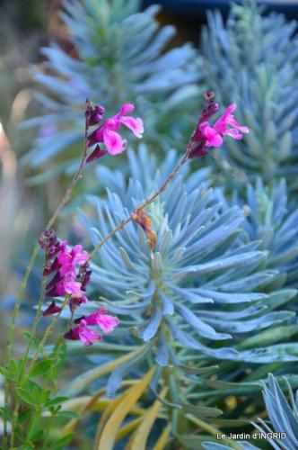 jardin ,bouquet 008.JPG