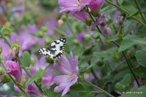 jardin matin,Romane ,nicky 034.JPG