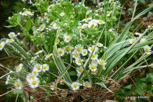 sentier des cygnes,hémérocalles,bouquet,jardin 159.jpg
