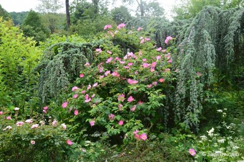 Tour du jardin mai avant et apres tonte 093.jpg