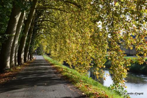 sauges,plectanthrus,Romane,canal,manthe r.,automne 044.JPG