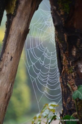 Brouillard,cypres chauve,jardinage 011.JPG
