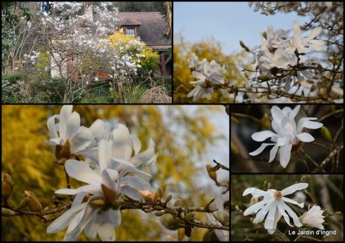 2021-03-03 printemps jardin,.jpg